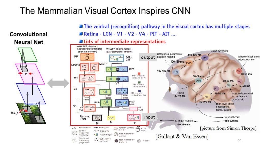 Convolutional Neural Net. output. input.